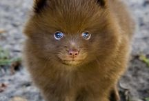 puppiws <3 / by makala bray