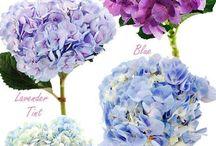 Flores / by Bazket Design bodas con detalle