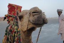 Pakistan  ✈ TRAVEL GUIDE / TRAVEL GUIDE ✈ Pakistan  (travel guide / city guide) / by Jetpac City Guides