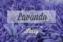 Lavandas na Itália, onde encontrar / #Lavanda fields in #Italy ___ Campos de lavanda na #Itália  Não é só na França que existem lavandas!  Também é possível encontrá-las na Itália, nos arredores de Roma.   Saiba como chegar até elas:  http://escolhoviajar.com/lilas-onde-encontrar-campo-lavanda-proximo-roma  #escolhoviajar #lavanda #rbbviagem #roma #lazio #italia