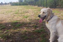 Melbourne Dog Parks / Off leash dog parks around town