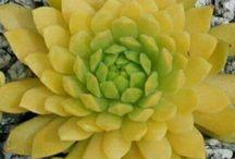 Yellower