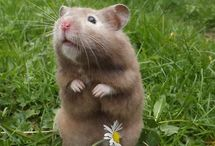 Hamster mum
