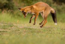 Animals / by Casie-Lynne Merrett