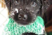 Puppies :) / by Kacie E