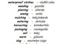 languages : hungarian