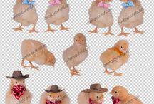 .PNG Photo Overlays / digital photography props, PNG files, photography overlays for sale