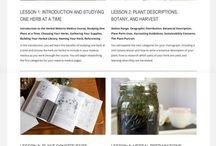 Learning: Medicinal plants