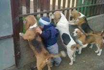 Cuccioli & Coccole / #Cuccioli e #Bambini, un binomio perfetto: #amore e #tenerezza fin da piccoli.