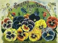 Pansies / by Laura Denney-Lawson