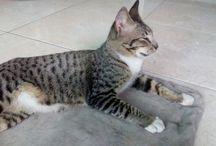 Java cats