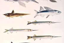 Fish, the philosophers of the sea / Fish lodjic is the beginning of understanding