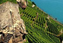 Vaud/Geneva