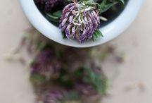 Herbs, Herbal Medicine, Materia Medica