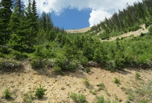 Steamboat Springs / Steamboat Springs, Colorado is where we call home. Check out the amazing places and sites you will find here. / by Steamboat Motors