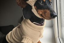 Dachsunds wearing clothes / Just when you think Dachshunds can't get any cuter, someone puts clothes on them!