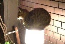 Gatos locos / Imágenes de gatos locos