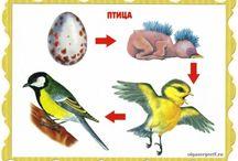 zvierata vyvoj