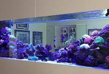 Ralf / Aquarium