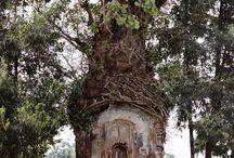 すてきな木