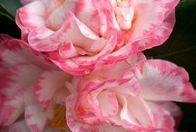 flowers / by Jill Crawford