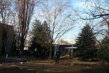 Fafelmérés / 2014.02.05-én az önkormányzat és a XIII. kerületi Közszolgáltató Zrt munkatásai jelenlétében sort keríthettünk a fák állapotfelmérésére