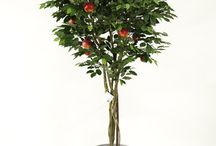 Premium Quality Artificial Trees / Artificial Olive Trees, Ficus Trees, Acers, Cherry Blossoms in pink or white. All made using real wood, these are very lifelike trees for the home or office enviroment.