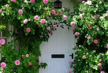 Doors and Gates / by Kathleen Melikian