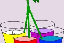Make Rainbow Roses / The multicolored Rainbow Roses are cool! Hand made illustrations of making Rainbow Roses process.
