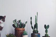 Interior Decoration - Cactus / by Carol Camino
