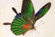 Papillons & Dragons / by Marsha Stepp