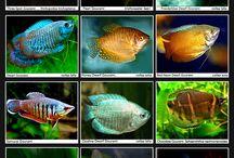FISHES / Aquarium