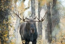 The Beauty of the Wild