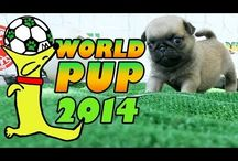 World Pup / by The Pet Collective Tv