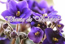 plantas sanadoras y protectoras...