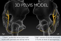 Pudendal Neuralgia / Pudendal Neuralgia is a treatable pelvic pain disorder. Interdisciplinary treatment approaches that include physical therapy, pharmaceutical management, interventional medicine and in some cases, surgery, are the most effective approaches for this disorder.