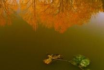 Photography, Just Wow.... / by Sanna Davis