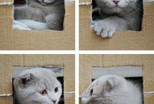 Schattige katjes
