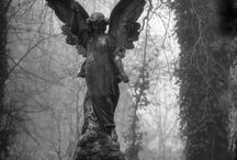 Don't blink / by Cindy Young