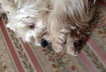 Cani. Animali. / Tofy, la mia badante.
