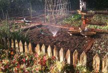 The joys of a Vegetable Garden