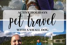 Travel with a pet