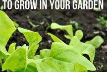 Growing Food / by Always Love Arts