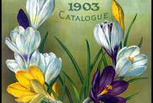 All Things Gardening Vintage Seed Packet - bulbs plant