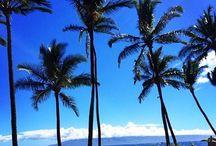 Beach Hotels & Resorts Interior Design / Top Hotel & Resorts