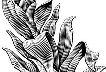 Blad-blommor-struktur-uppbyggnad