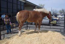 Biggest Horse in the World: Radar