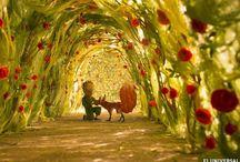 •Le Petit Prince•
