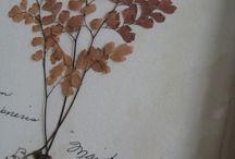 Herbarium Ideen