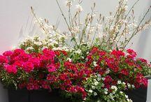 Kwiaty balkonowe inspiracje kompozycje